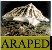 araped logo